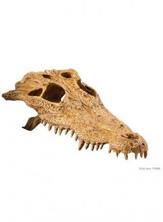 Crocodille skull exoterra decorazione