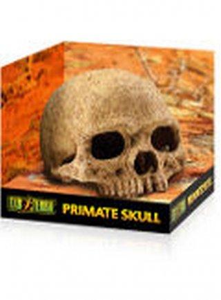 RIfugio per rettili Primate Skull Small
