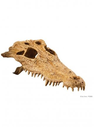 Crocodille skull exoterra decorazione