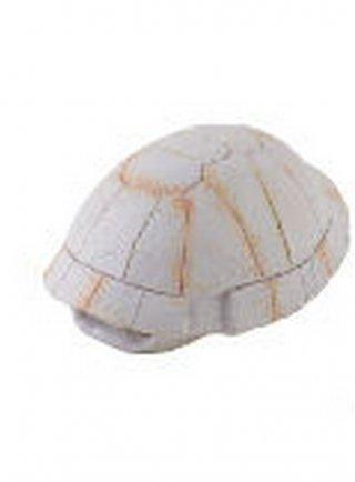 Rifugio per rettili guscio di tartaruga