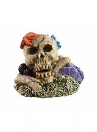 Decorazione per acquari e terrari Haquoss Koral Skull 4