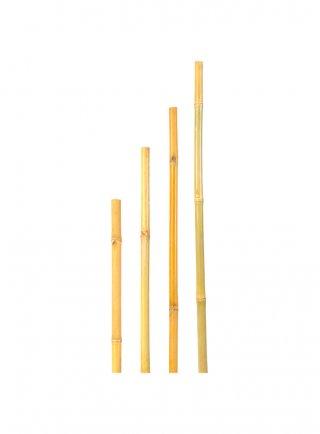 Canna bamboo per orto e giardino