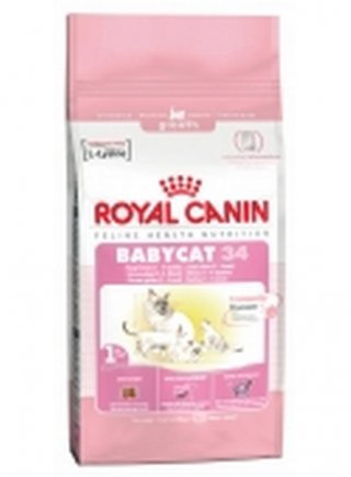 Babycat Royal Canin