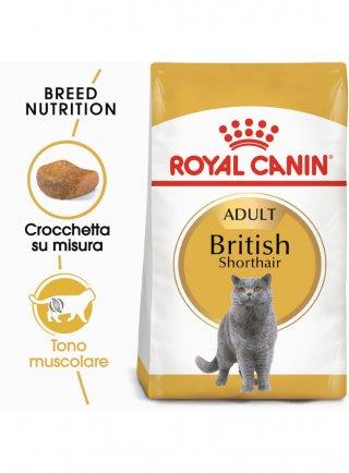 British Shorthair Royal Canin