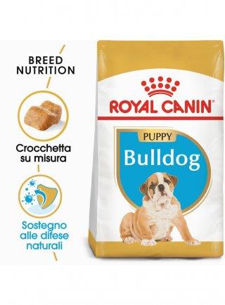 Bulldog puppy Royal Canin