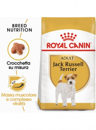 Jack Russell Royal Canin