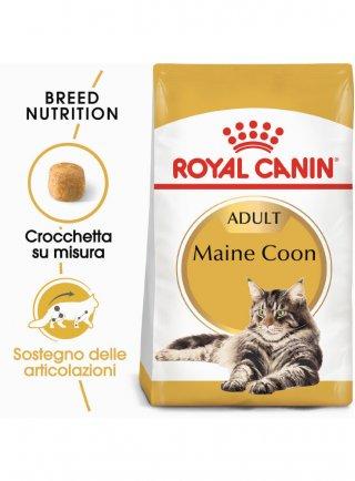 Maine Coon Royal Canin