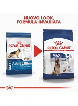 Maxi Adult 5+ cane Royal canin