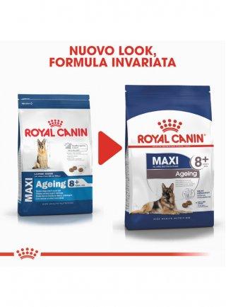Maxi Ageing 8+ cane Royal Canin