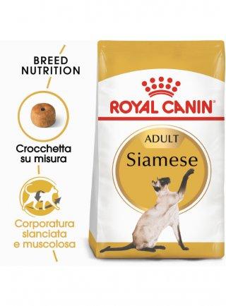 Siamese Royal Canin