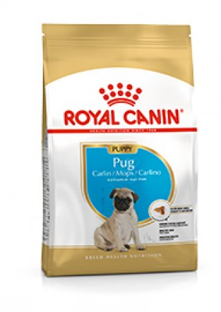 Carlino puppy Royal Canin