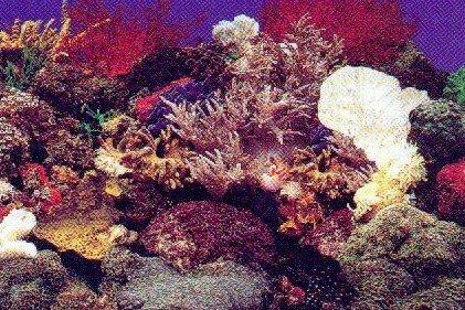 Sfondo marino decorativo per acquario marino trixie for Acquario marino 300 litri prezzo