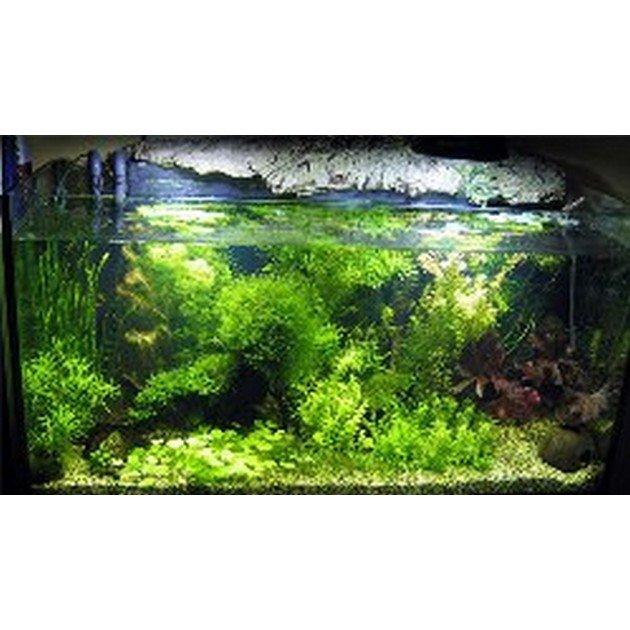 Allestimento completo amazonia per acquari da 110 a 150 for Piante da acquario