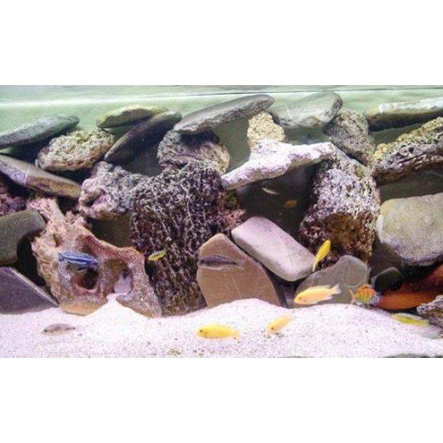 Allestimento completo ciclidi africani per acquari da 70 a for Ciclidi africani