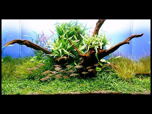 Assortimento piante zen 6pz Piante petingros