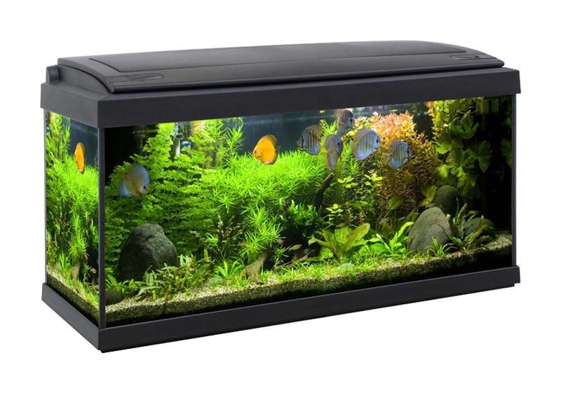 acquario milo 80 x 30 petingros